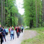 Las. ścieżką wśród drzew idzie grupa miłośników nordic walkingu